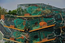 Maine Lobster Traps