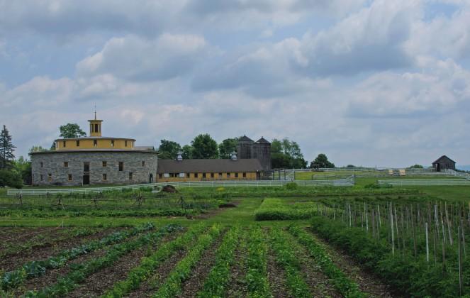 Shaker Farming