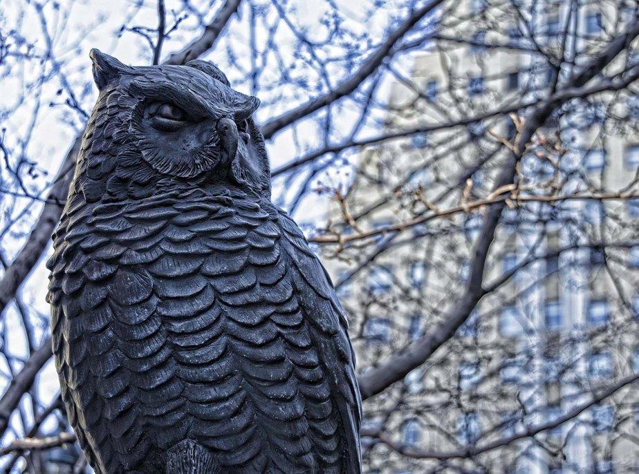 Herald Square Owl