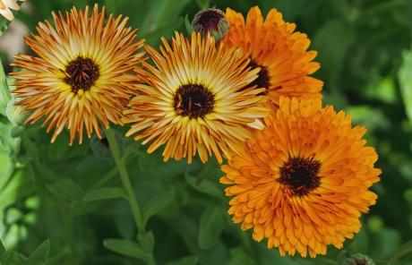 Locust Grove Floral Orange